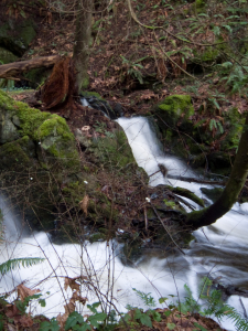 small waterfall with green ferns