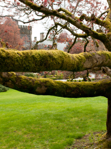 big tree with moss on branches