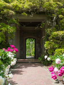 garden path flanked by pink and white flowers and bushy greenery