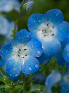 blue flowers on a green background