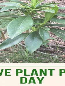 Invasive Plant Pulling Day: May 18