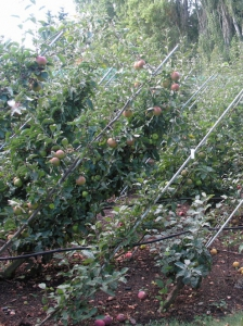 B.C. Fruit Testers Winter Pruning Party