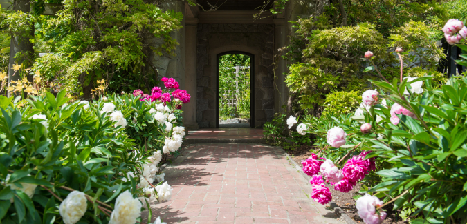 bright pink flowers flank a clay path into a garden arch