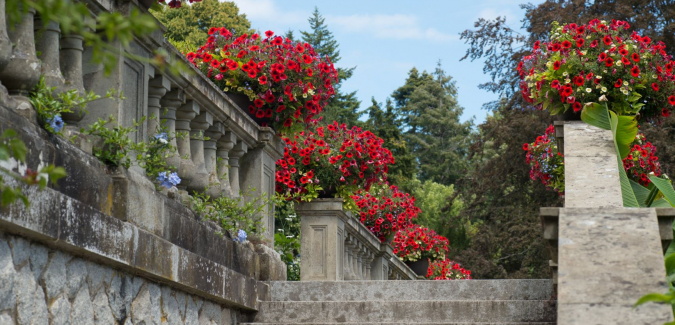 pots of red flowers atop a stone wall and staircase