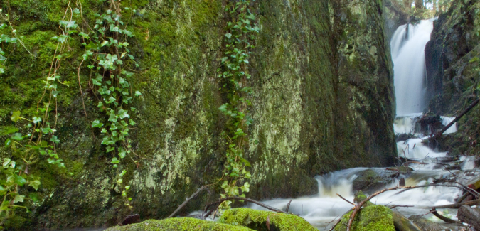 A stream running down a waterfall and over moss-covered stones.