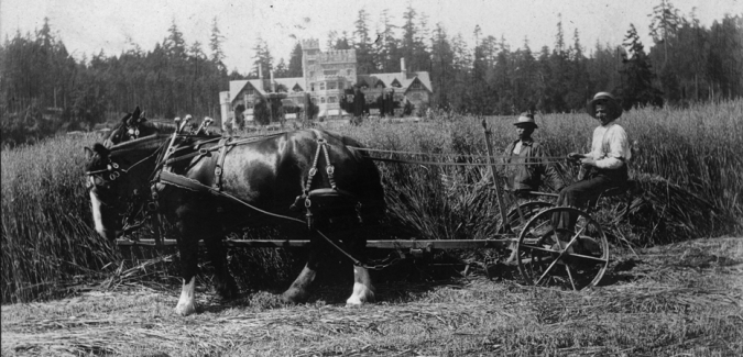 Image foreground is a set of horses pulling a wagon with with a teamester guiding them, beside the teamster is a chinese labourer. The image background is a hillside with hatley castle