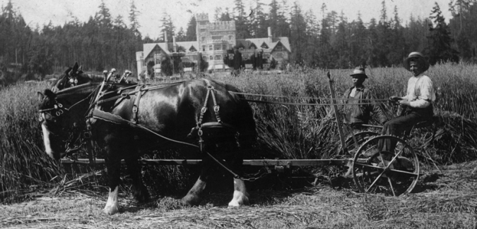 A Chinese labourer works alongside a teamster who guides a horse-drawn wagon near Hatley Castle.